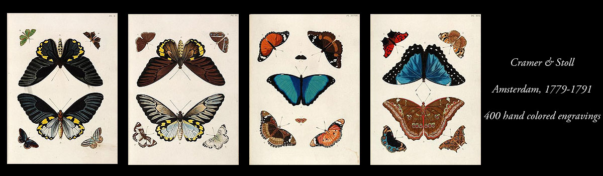 Cramer and Stoll Butterfly Engravings